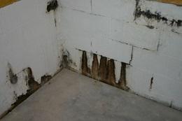 Crawlspace Mold Removal Hampden County
